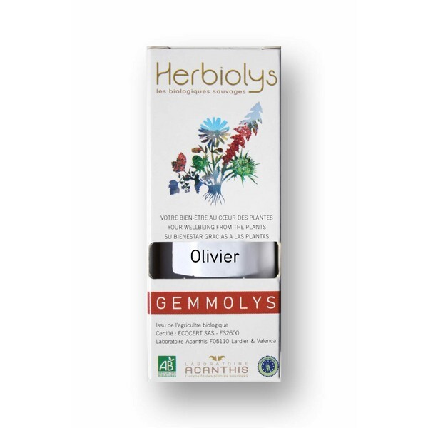 Olivier 50ml bio olea europaea herbiolys acheter sur - Olivier olea europaea prix ...