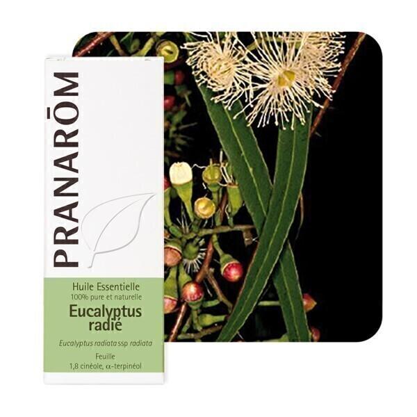 Pranarôm - Huile essentielle Eucalyptus radié 10 ml
