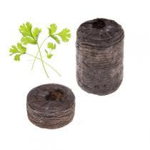 Tregren - Capsule de graines x2 - Persil